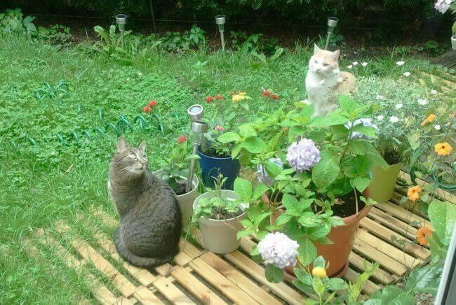 Zwei Leidenschaften vereint: Rosmaries Katzen im eigenen Garten